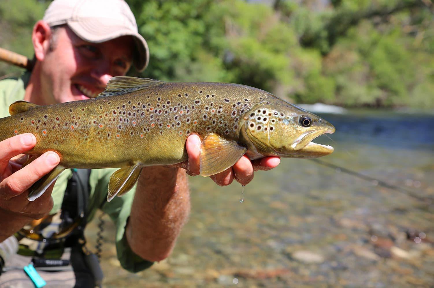 best fly fishing in arkansas