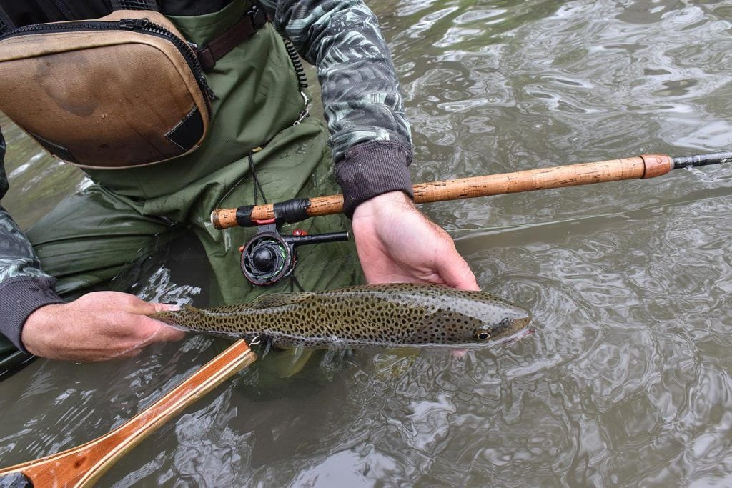 Trout Fishing in Oklahoma - Ultimate 2019 Guide - Fly Fisher Pro