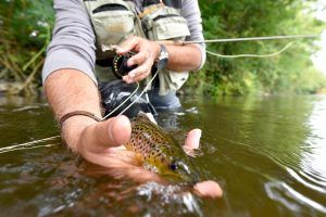 best 3 weight fly rod