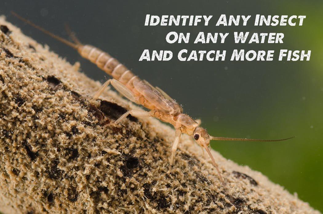 fly fishing entomology