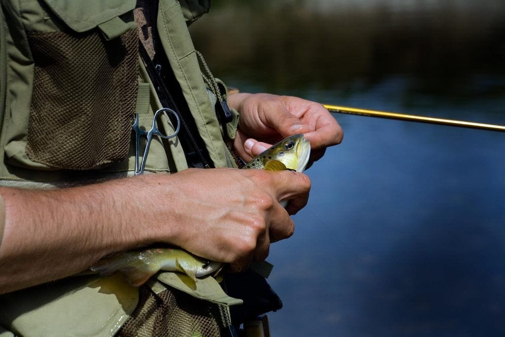 fishing pliers trout