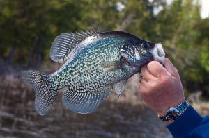 best panfish flies