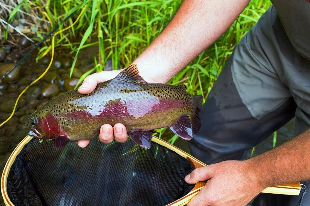 michigan fish species