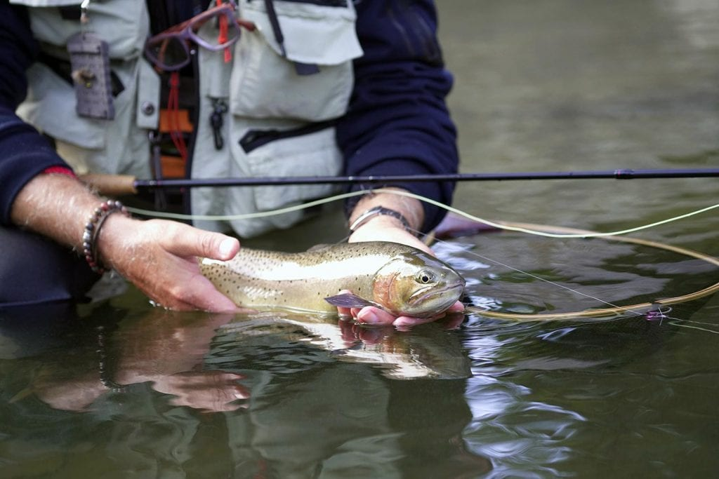 catch-and-release rainbow trout