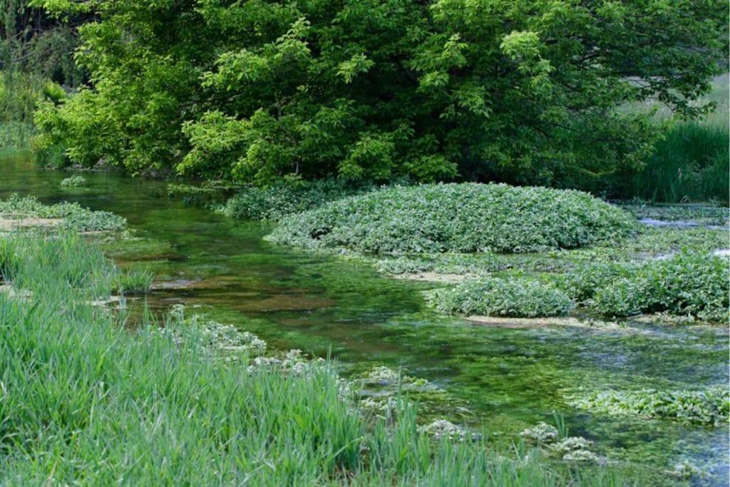 Falling Spring Creek