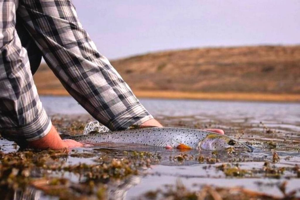 species rio outbound short