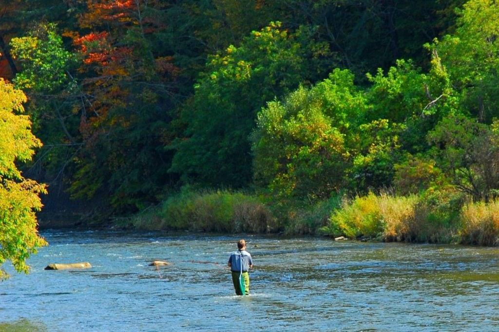 Free Salmon Fishing Tips