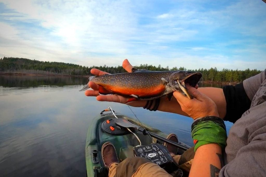 What Exactly is a Brook Trout