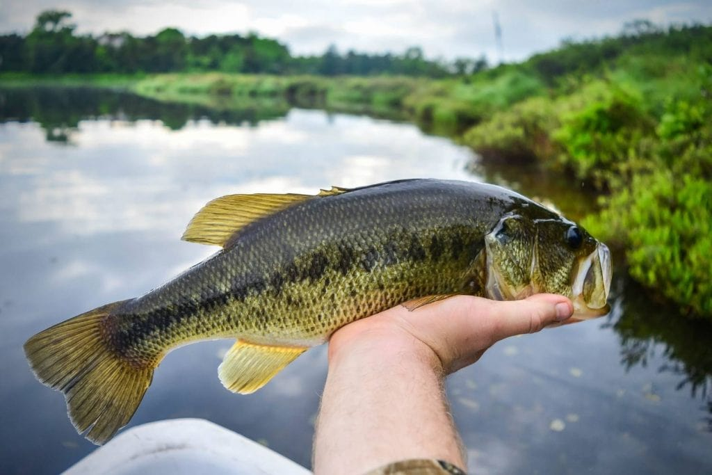 Where to target largemouth bass