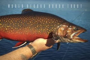 world record brook trout