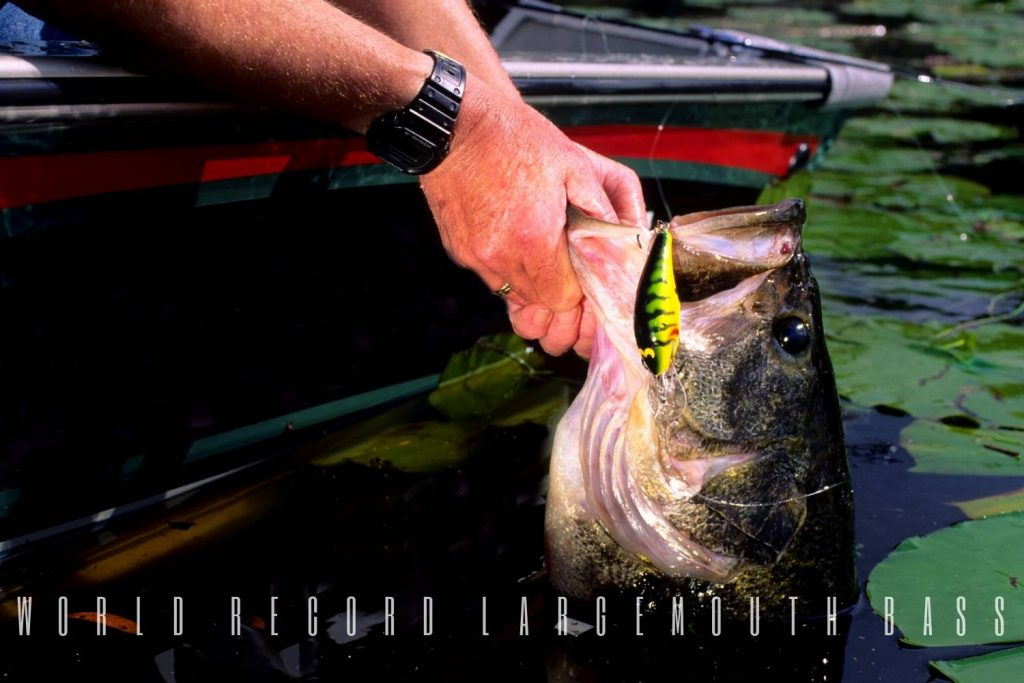 world record largemouth bass