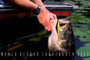 world record largemouth bass