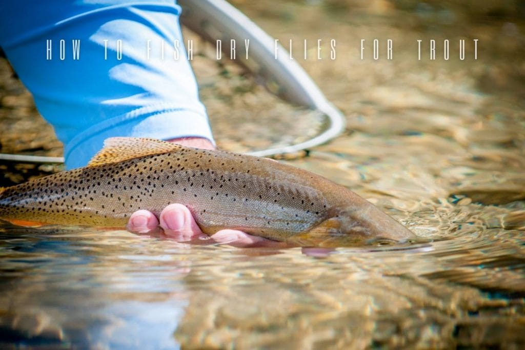 How to Fish Dry Flies for Trout
