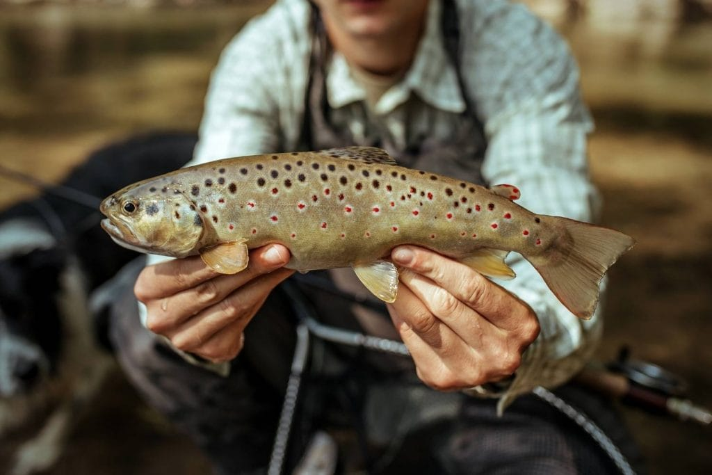 What species of fish are you fishing for and where