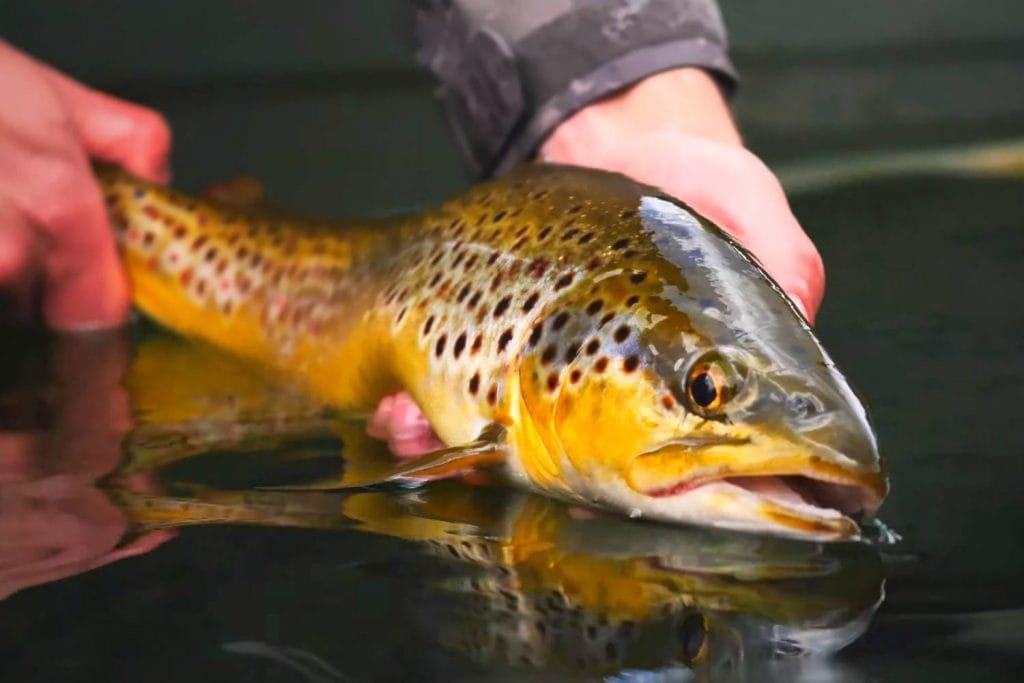 Finding Stillwater Trout