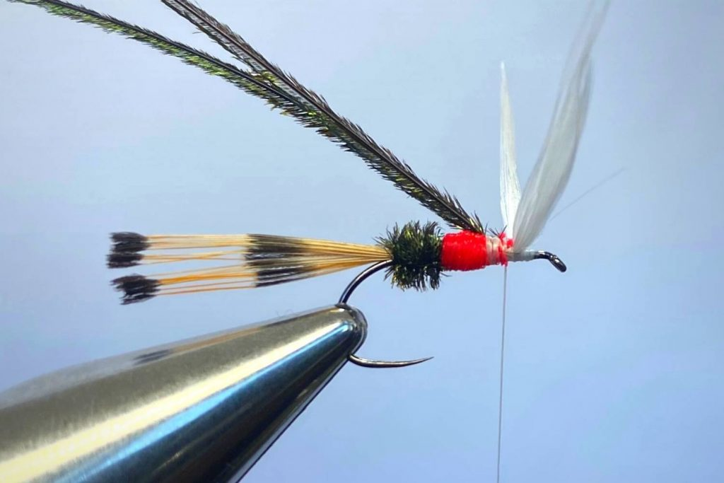 How to tie a Royal Coachman Fly Step 10