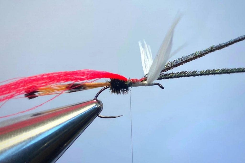 How to tie a Royal Coachman Fly Step 9