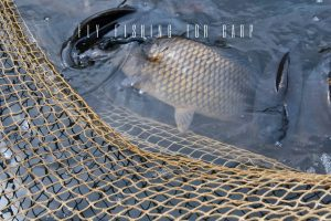 The Ultimate Guide to Fly Fishing for Carp