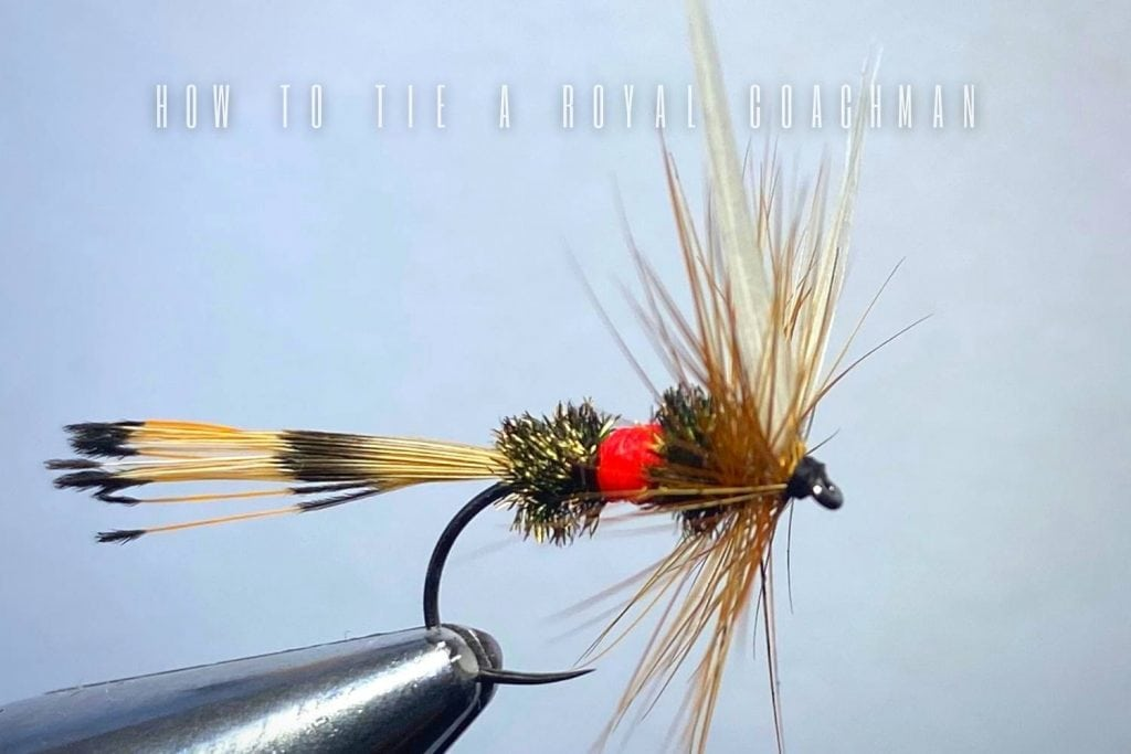 how to tie a royal coachman fly
