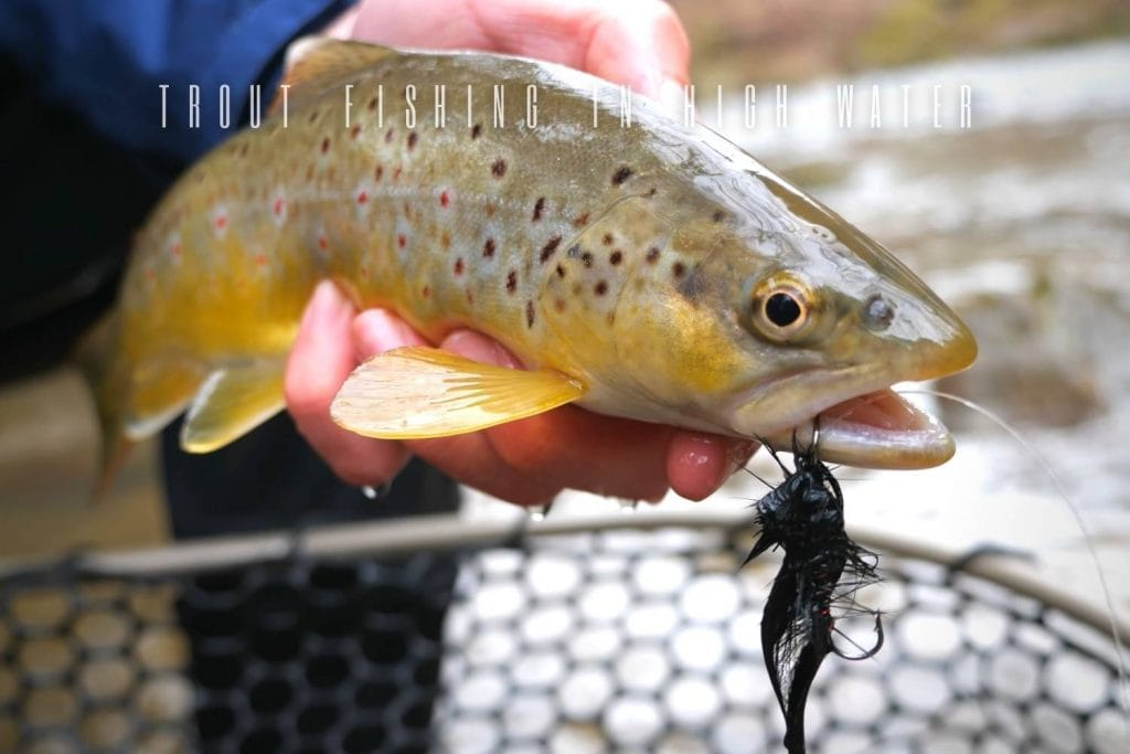 trout fishing in high water